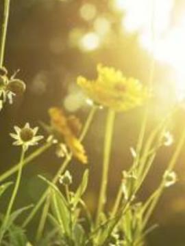 阳光明媚的心情的句子_关于描写阳光明媚的好句子